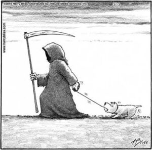 Dogs & death