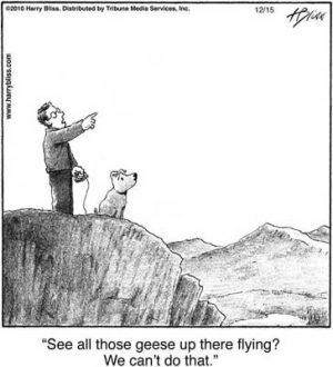 See all those Geese up there...