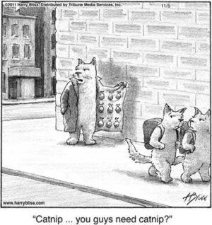 Catnip... you guys need catnip?
