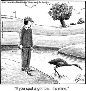 If you spot a golf ball...