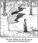 My word, Bailey...