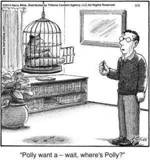 Polly want a...