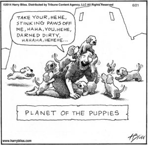 Planet of the puppies...