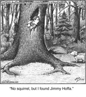 No squirrel