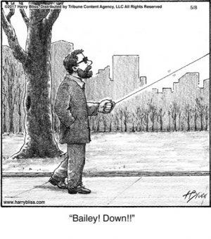 Bailey! Down!!..