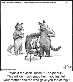 Was it the Jack Russell?