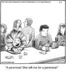 A perennial!..