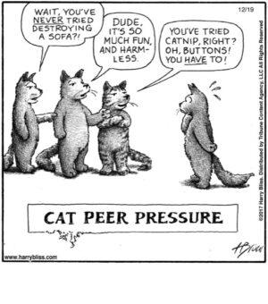 Cat peer pressure...