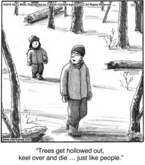 Trees get hollowed out...