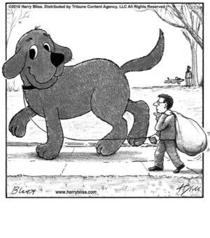 Dog walk...