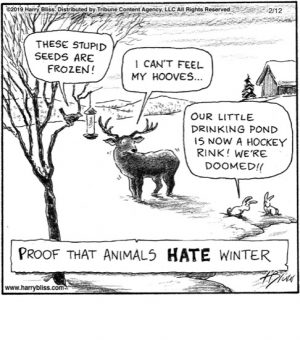 Proof that animals HATE...