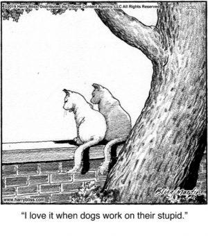 I love it when dogs...