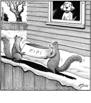 Fifi...