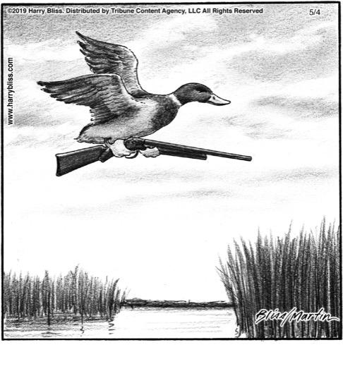 Duck hunt...