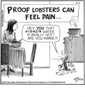 Proof Lobsters can feel pain...