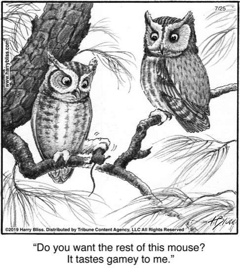 Do you want the rest of this mouse?..