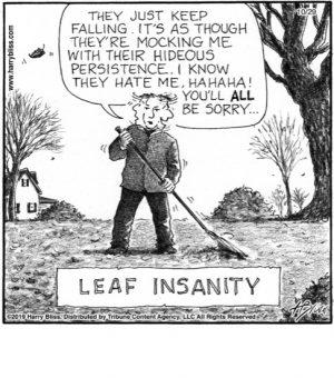 Leaf insanity...