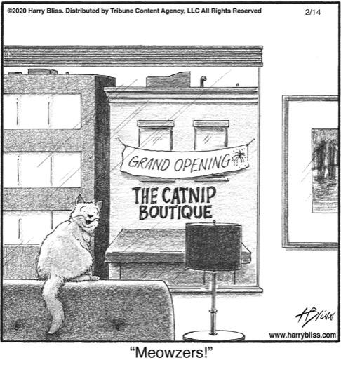 The catnip boutique...