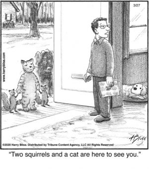 Two squirrels and a cat...