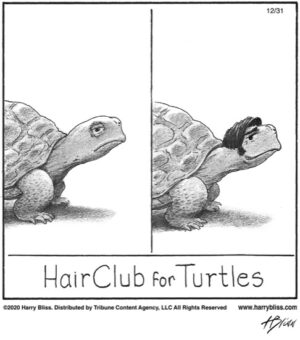 HairClub for turtles...