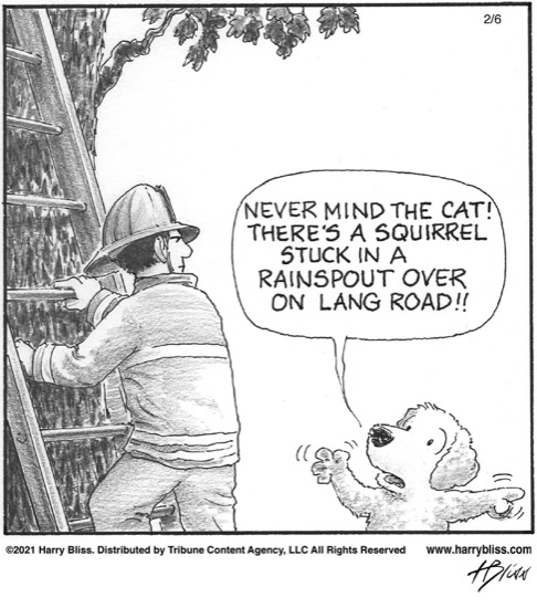 Never mind the cat…