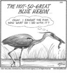 The not-so-great blue heron…...