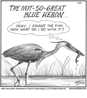 The not-so-great blue heron…