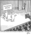 Favorable Meow…...