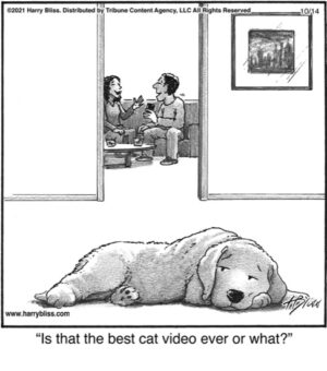 Is that the best cat video…