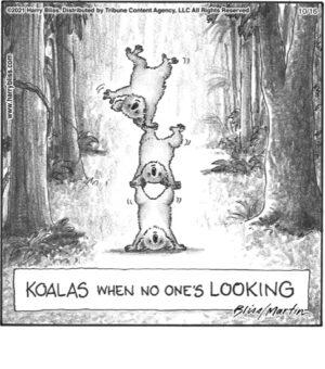 Koalas when no one's looking…